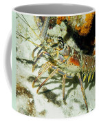 Caribbean Spiny Reef Lobster  Coffee Mug