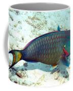 Caribbean Stoplight Parrot Fish In Rainbow Colors Coffee Mug