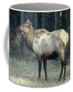 Elk Side Profile - Banff, Alberta Coffee Mug