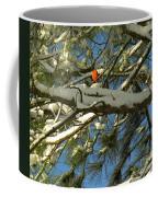 Carolina Cardinal Coffee Mug