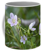 Carolina Spring Beauty - Wide-leaved Spring Beauty - Claytonia Caroliniana Coffee Mug