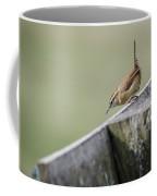 Carolina Wren Two Coffee Mug