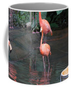 Cartoon - A Flamingo In The Small Lake In Their Exhibit In The Jurong Bird Park Coffee Mug