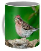 Cassins Finch Carpodacus Cassinii Coffee Mug