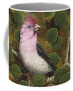 Cassins Finch Coffee Mug