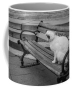 Cat On A Bench Coffee Mug
