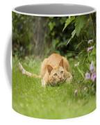 Cat Watching Prey Coffee Mug