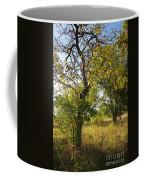 Catalpa Coffee Mug