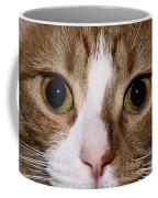 Cats Face Coffee Mug