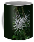 Cats Whiskers Kitty Whiskers Java Tea Orthosiphon Aristatus Nahiku Rainforest Maui Hawaii Coffee Mug