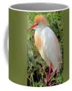 Cattle Egret Adult In Breeding Plumage Coffee Mug
