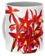 Cattleya Chocolate Drop Kodama Coffee Mug