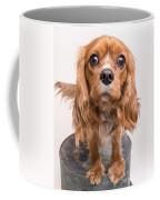 Cavalier King Charles Spaniel Puppy Coffee Mug by Edward Fielding