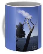 Cavtat Tree Coffee Mug