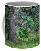 Cedar Along The Trail Of Cedars Glacier National Park  Coffee Mug