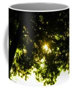 Cedar Filtered Sun Coffee Mug