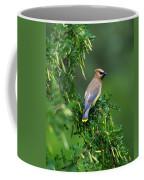 Cedar Waxwing 2 Coffee Mug