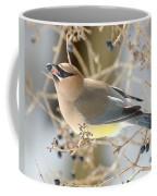 Cedar Waxwing Feeding Coffee Mug