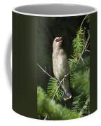 Cedar Waxwing Juvenile 2 Coffee Mug