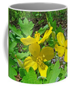 Celandine Poppy Or Wood Poppy - Stylophorum Diphyllum Coffee Mug