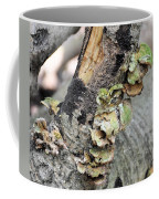Violet-toothed Polypore Coffee Mug