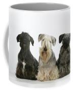 Cesky Terrier Dogs Coffee Mug