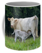Charolais Cattle Nursing Young Coffee Mug