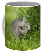 Chartreux Cat And Grass Coffee Mug