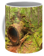 Cheakamus Old Growth Cedar Stumps Coffee Mug