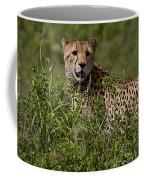 Cheetah   #0090 Coffee Mug