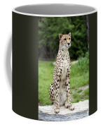 Cheetah's 01 Coffee Mug
