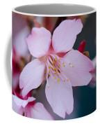 Cherry Blossom Special Coffee Mug