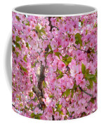 Cherry Blossoms 2013 - 097 Coffee Mug
