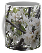 Cherry Blossoms Branching Out Coffee Mug