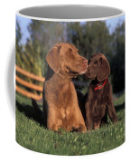Chesapeake Bay Retrievers Coffee Mug