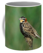 Chestnut-collared Longspur Coffee Mug