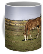 Chestnut In The Pasture Coffee Mug