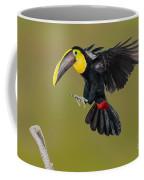 Chestnut-mandibled Toucan Landing Coffee Mug