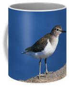 Chevalier Guignette Tringa Hypoleucos Coffee Mug