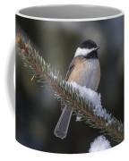 Chickadee On The Spruce Coffee Mug