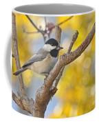Chickadee With His Prize Coffee Mug