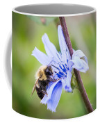 Chicory Bee Coffee Mug