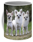 Chihuahua Dogs Coffee Mug