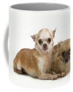 Chihuahua Puppy Dogs Coffee Mug