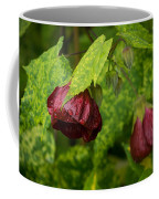 Chinese Lanterns Refreshed By The Rain Coffee Mug