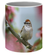 Chipping Sparrow In Blossoms Coffee Mug by Deborah Benoit