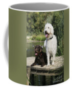 Chocolate And Cream Labradoodles Coffee Mug