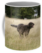 Chocolate Labradoodle Running In Field Coffee Mug