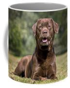 Chocolate Labrador Dog Coffee Mug