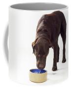 Chocolate Labrador Drinking Coffee Mug